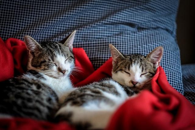 Katzenfutter kaufen – Was muss man beachten?